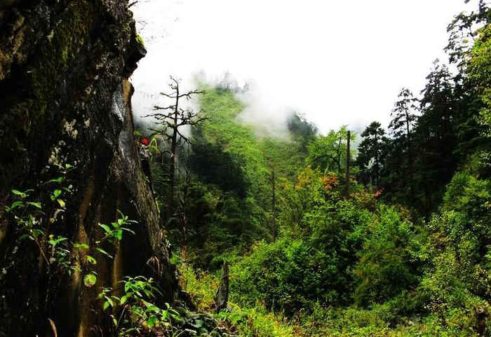 Страшное в лощине Чёрного Бамбука