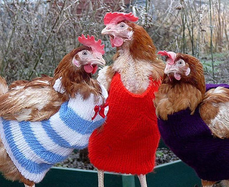 Курица в подгузниках