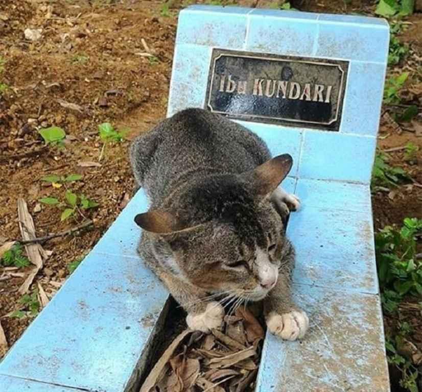 Кот не перенёс смерть хозяйки и умер на её могилке