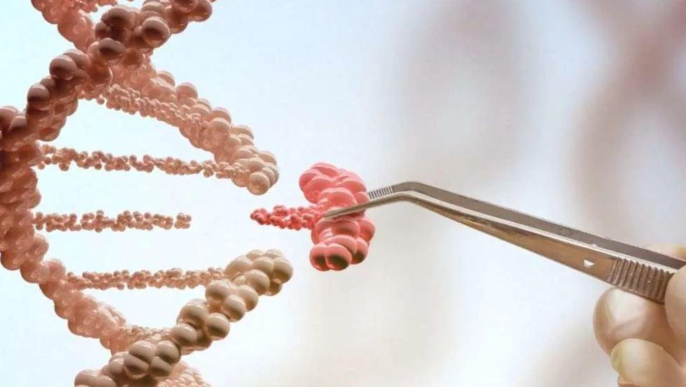 Суперспособная девочка с мутацией гена ACTN3